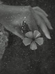 (Carina️️✭) Tags: flor flower mão hand natureza nature branco black bw blackandwhite white preto pretoebranco velho antigo old retro vintage delicado delicate luz light lovely peace paz simple simples br brasil ♥brasil ❀