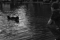 (giovanibr) Tags: karlskirche karlsplatz viena vienna austria wien street people man dog lake town square play throw ball swim