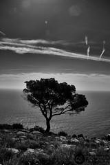 IMG_4627 (J.Gargallo) Tags: blancoynegro blackwhite blanconegro blackandwhite byn bw canon canon450d canonefs18200 eos eos450d 450d outdoor oropesa castellón comunidadvalenciana españa paisaje landscape