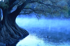 BLUES. (NIKONIANO) Tags: landscape blue blues lago sabino surreal árbol tree unárbol