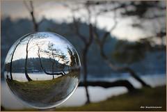 Links (der bischheimer) Tags: kugel crystal ball rund baum canon derbischheimer vogelberg kamenz glaskugel