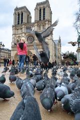 Flock of tourists (BrianEden) Tags: pigeons france xpro1 cathedralenotredame paris travel fuji flock pigeon birds notredame fujifilm cathedral paris4earrondissement îledefrance fr