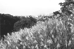 桃園市_131 (Taiwan's Riccardo) Tags: 2016 taiwan bw 135film negative plustek8200i kodakdoublex5222 slr contax137md zeisslens planar fixed 50mmf17 cymount 桃園縣 桃園市