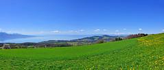 Vue sur le Léman (Diegojack) Tags: chardonne vaud suisse paysages campagnes montpelerin panorama léman lac