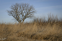 One Tree Hill (JLDMphoto) Tags: nikon d7200 1685mm tree greass hill solitude landscape nature outside outdoors rural kansas