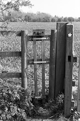 Fence looks like it has a face (tercrossman87) Tags: canon 7 50mm 18 ilford fp4 125 119 film home development ilfotec lc29 epson v550