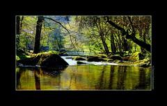 P2260064 (cowsandgirl71) Tags: panasonic fz200 france nature lumix lumière ombres reflet couleur cowsandgirl71 eau arbre
