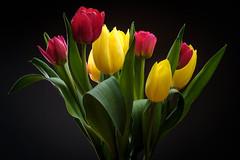 Happy Easter! Frohe Ostern! Pascua feliz! Joyeuses pâques! (macrobernd) Tags: blumenstraus ostern tulpen easterhappy easter froheostern leica macroelmarit60mm flash blitz cactusimages blumen flowers fineart