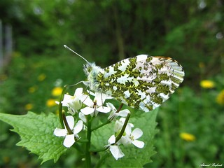 Butterfly 1212