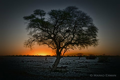 When the night begins in Africa (marko.erman) Tags: namibia etosha pan tree sunset silhouette sony landscape sky outside travel nature night beautiful orange moment serene serenity wild nationalpark beginning quiet bluehour safari africa