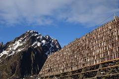 Getrokneter Stockfisch (Globo Alpin) Tags: lofoten norwegen skitouren winter 2017 skiflugreisen ausland