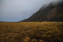 Morning fogs, Iceland (Vagabundina) Tags: fog mist morning could hills mountain nature grass field landscape scenery iceland southiceland hoff lava nikond5300 nikon dsrl horse