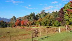 Tawonga South and the Kiewa Valley (dok1969) Tags: autumn victoria colour trees