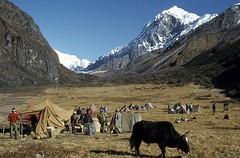 Camp au pied du Pandim (Daniel Biays) Tags: pandim montagne sommet sikkim inde campement dzo himalaya