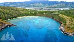 HANAUMA BAY (Brandon Kapana Photography) Tags: hanaumabay tourist water ocean reef hawaii aloha mountains reflection reflections grass sea photography photo drone mavic dji ariel sky air attraction love happy cliffs surf