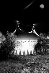 il circo è tornato in città, o non se ne è mai andato (federicalepri) Tags: circus bnw clown night blackandwhite laugh city happiness