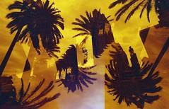 subtropics (m_travels) Tags: konorotwild400cn 35mmfilm filmphotography experimental analogue palmtrees sky lightleak motionpicturefilm sanfrancisco sf hot heat red yellow