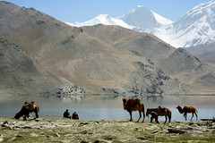 Kyrgyz Men Karakul Lake Muztagh Ata Xinjiang Uyghur Autonomous Region of China (eriagn) Tags: kyrgyz men ethnic bactriancamel camel horse karakullake muztaghata chinanationalhighway314 karakoramhighway kkh sanddune river dune mountain snow peak stonebuilding highway road highaltitude scenic landscape remote rugged geology eurasianplate indianplate tectonics sarykol yellowlake gezrivercanyon ghezriver murztaghata kyrghiz pakistan pamir kunlun silkroad traderoute ngairehart ngairelawson eriagn threadsinthesand expedition travel adventure photography route asia china centralasia farwesternchina cold kongershan littlestories picswithsoul exploreunexplored kashgar kashi