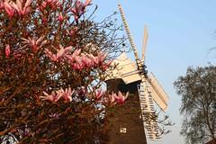 Holgate Windmill, April 2017 - 1