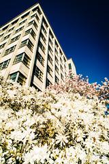 Fleurs et béton se côtoient devant l'hôtel de ville de Brest #printemps (OlivierDREAN) Tags: fleur sonyalpha7rmarkii ilce7rm2 f13 21mm sony ze iso100 distagont2821 zeiss