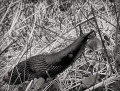 Slug........... (apcmitch) Tags: ireland uploaded:by=flickrmobile iphonephotos blackandwhite