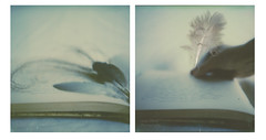 When words take flight (l'imagerie poétique) Tags: limageriepoétique poeticimagery polaroidsx70sonar diptych ethereal dreamy theimpossibleproject instantphotography analogphotography annesilver ishootfilm prymemagazine impossiblehq polavoid