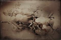 Phil's grapes-9973 (Poetic Medium) Tags: stilllife produce organic kitcamghostbird hipstamatic mextures ipod food