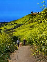 Humans and Dogs Hiking (Zeetz Jones) Tags: superbloom wildflowers nature ranchopalosverdes portuguesebendreserve superbloom2017 rollinghills southerncalifornia