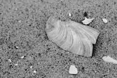 Chincoteague and Assateague Islands_0044sm (picturetker) Tags: chincoteague assateague island ponies vacation beach sand nature outdoors spring eastern shore virginia delmarva peninsula