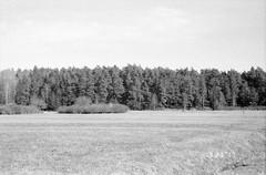 a remembered field (Mister.Marken) Tags: nikonf4 kodak 400tx nikonmf22databack sweden madeinsweden blackandwhite trees field