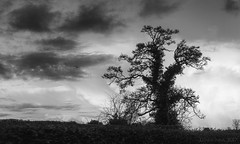 The tree chronicles: chapter X - excited dances (lunaryuna) Tags: wales anglesey island landscape sky cloudscape tree silhouette dancingtree imagination blackwhite bw monochrome treetales lunaryuna