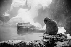 Nagano - Sneeuwmakaak 03 (coopertje) Tags: japan sneeuwmakaak makaak macaque snowmonkey nagano japanesemacaque jigokudanimonkeypark jigokudanijaenkoen