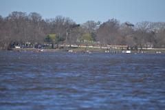 ABS_0082 (TonyD800) Tags: steveneczypor regatta crew harritoncrew copperriver rowing cooperriver