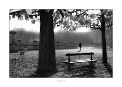 Paris n°151 - A Stroll In The Park (Nico Geerlings) Tags: ngimages nicogeerlings nicogeerlingsphotography leicammonochrom 50mm summilux paris parijs france blackandwhite jardin park jardinduluxembourg autumn