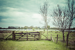 If the gates are open, walk in; If the gates are close, find a way and move in! (Peter Jaspers (sorry less time to comment)) Tags: frompeterj© 2017 olympus zuiko omd em10 1240mm28 lekdijk schalkwijk utrecht hff fence fenced vintage happyfencefriday gate klompenpad lintenliniepad lente spring
