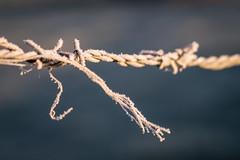 eines Morgens... (Timo Nennen) Tags: freeze fost cold kalt schnee eis macro makro ice draht stacheldraht steel stahl eisen