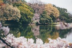 埼玉 大宮公園|東京都 Tokyo (里卡豆) Tags: 埼玉 大宮公園 東京 tokyo olympus penf 25mm f12 pro 2512pro