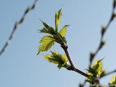 (takafumionodera) Tags: fujisawa japan leaf olympuspenf plant 植物 葉 藤沢