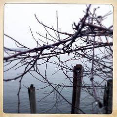 Lake Champlain, grey day (* a m e l i a *) Tags: lakechamplain vermont vt burlington rainy overcast cloudy grey spring lakefront branches raindrops barebranches