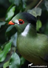 Toerako (PAPERCUTSKIN) Tags: leaf animal vlindersaandevliet vlinders aan de vliet bird green toerako