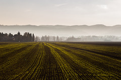 Lines (Massimo_Discepoli) Tags: lines fields trees mist perspective distance cultivated landscape stripes