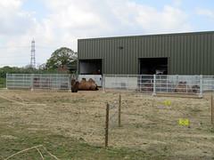 Bactrian Camels, Yorkshire Wildlife Park 2017 (Dave_Johnson) Tags: yorkshirewildlifepark ywp wildlifepark park zoo animal animals southyorkshire yorkshire bactriancamel bactriancamels camel camels