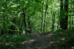 DSC_2620 (oria77) Tags: dolina bolechowicka krakow valley woodland poland