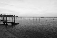 151227IMGP7763 (aureliedumartin) Tags: borddemer villages de pêcheurs cap ferret noir et blanc seaside