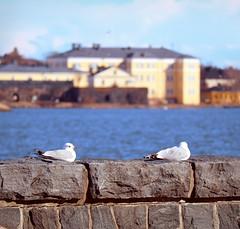 On a break (samikahkonen) Tags: helsinki finland suomi seagull lokki sea north nordic spring europe