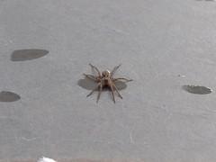 DSC00974 (familiapratta) Tags: sony dschx100v hx100v iso100 natureza inseto insetos nature insect insects