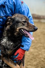 Кожуховский приют (JewishBetelgeuse) Tags: shelter dog homeless takeadogfromshelter