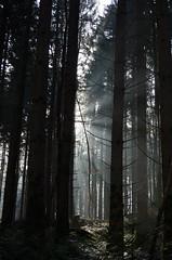 Sunlight (Aah-Yeah) Tags: sunlight sunbeams sunrays sunshine sunbeam sunray sonnenstrahlen sonnenlicht sonnenschein wald forest winter achental chiemgau bayern nebel fog mist