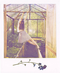 The Bell Jar (R o t w a n g) Tags: light plants flower girl analog project hair polaroid photography soft long pastel ghost dream dancer greenhouse 600 ethereal instant dominique sylvia plath vanish hille 52weeks rotwang