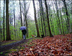En avant pour une 59me anne! (chando*) Tags: trees dogs me leaves umbrella self woods path moi arbres chemin fort feuilles chiens parapluie chando